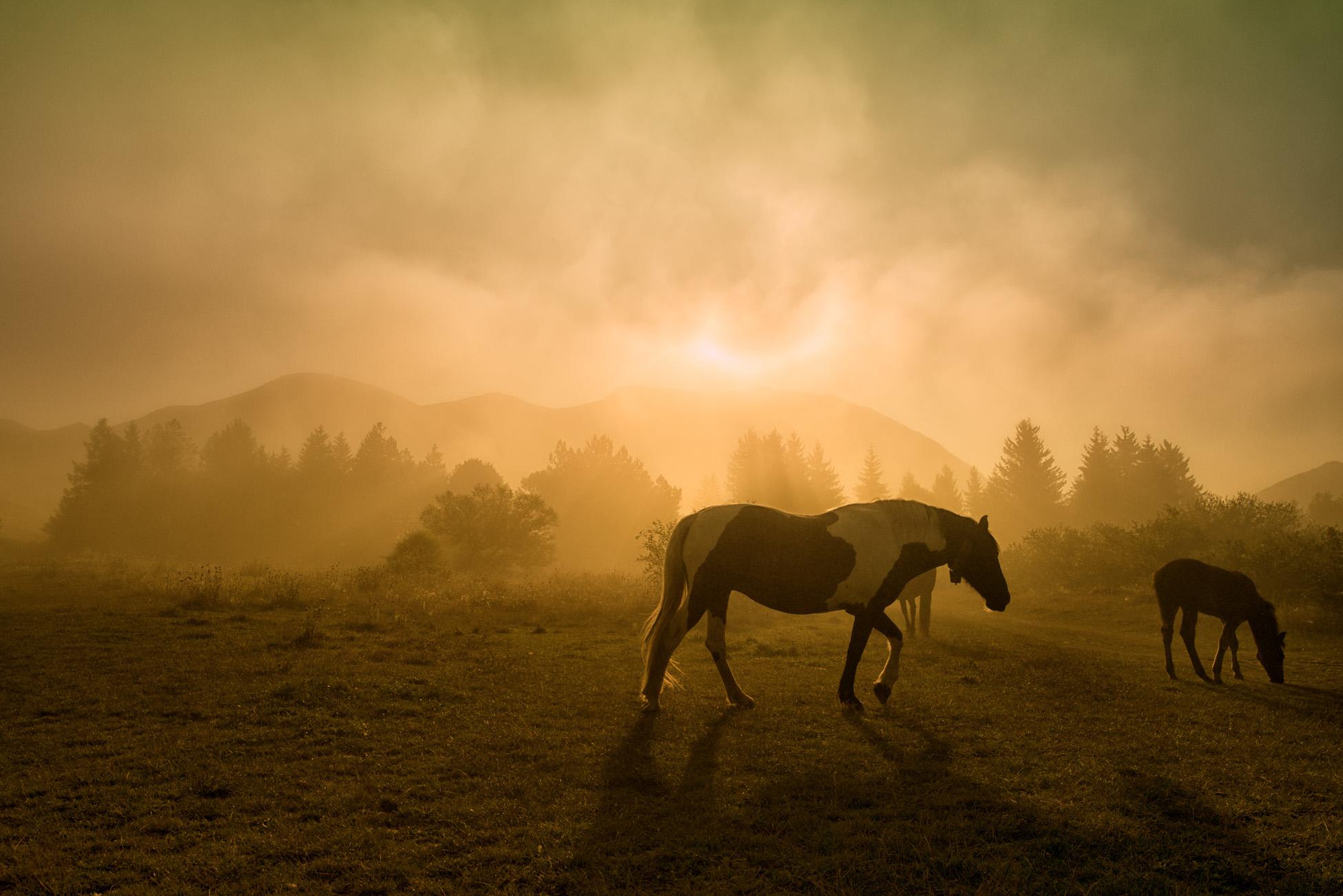 Summer Fog at dawn...