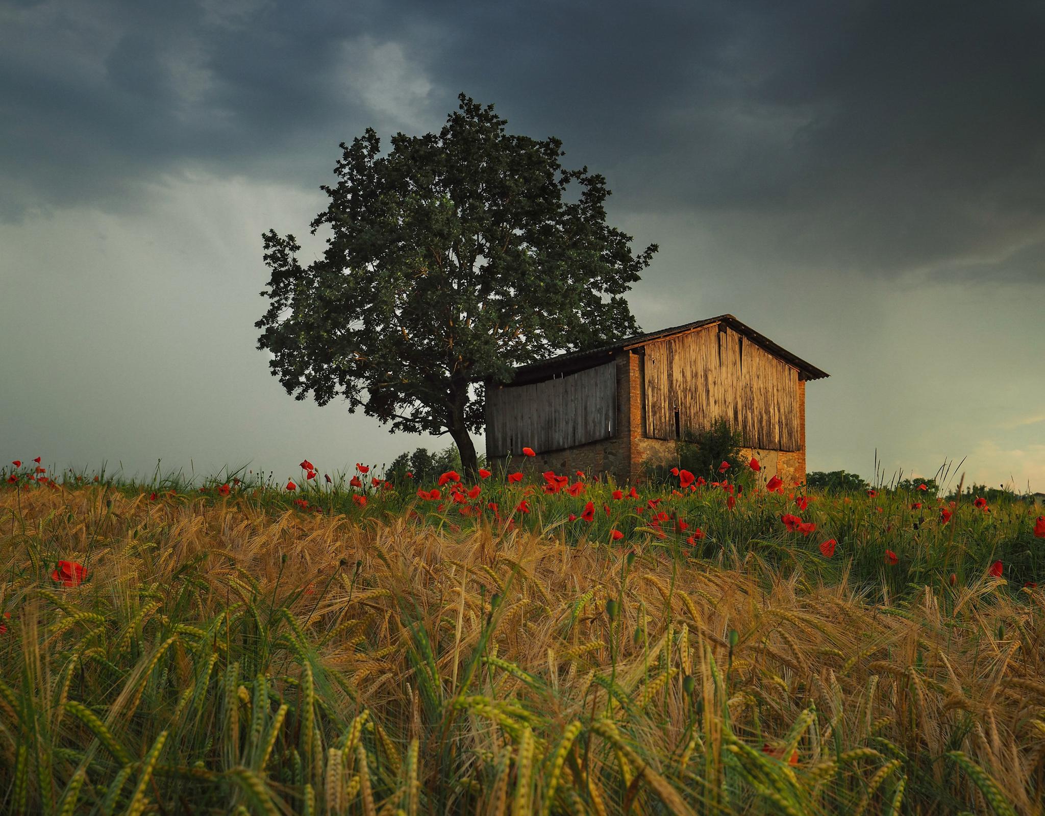 Parma Hills ...