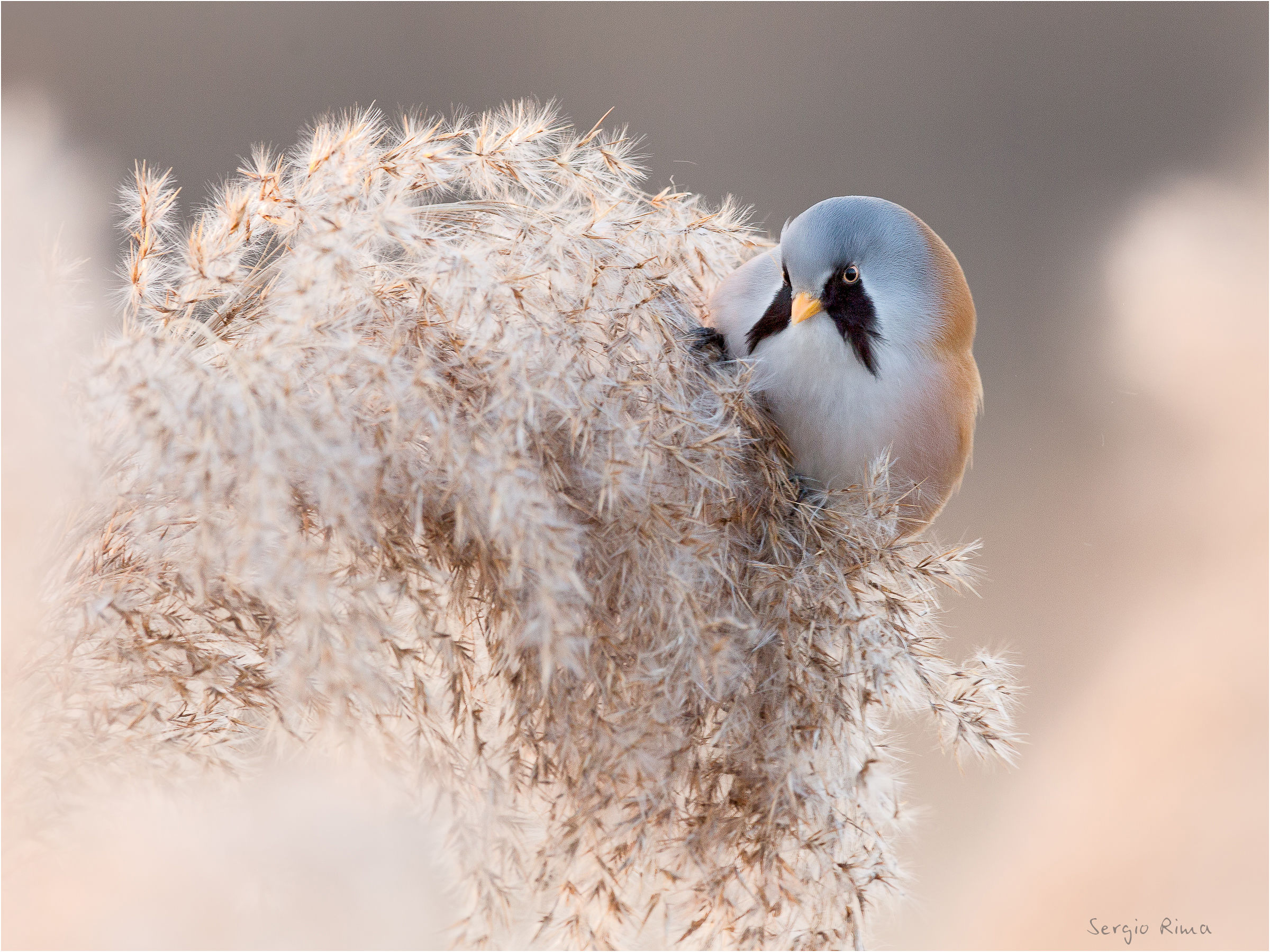 In the Reeds......