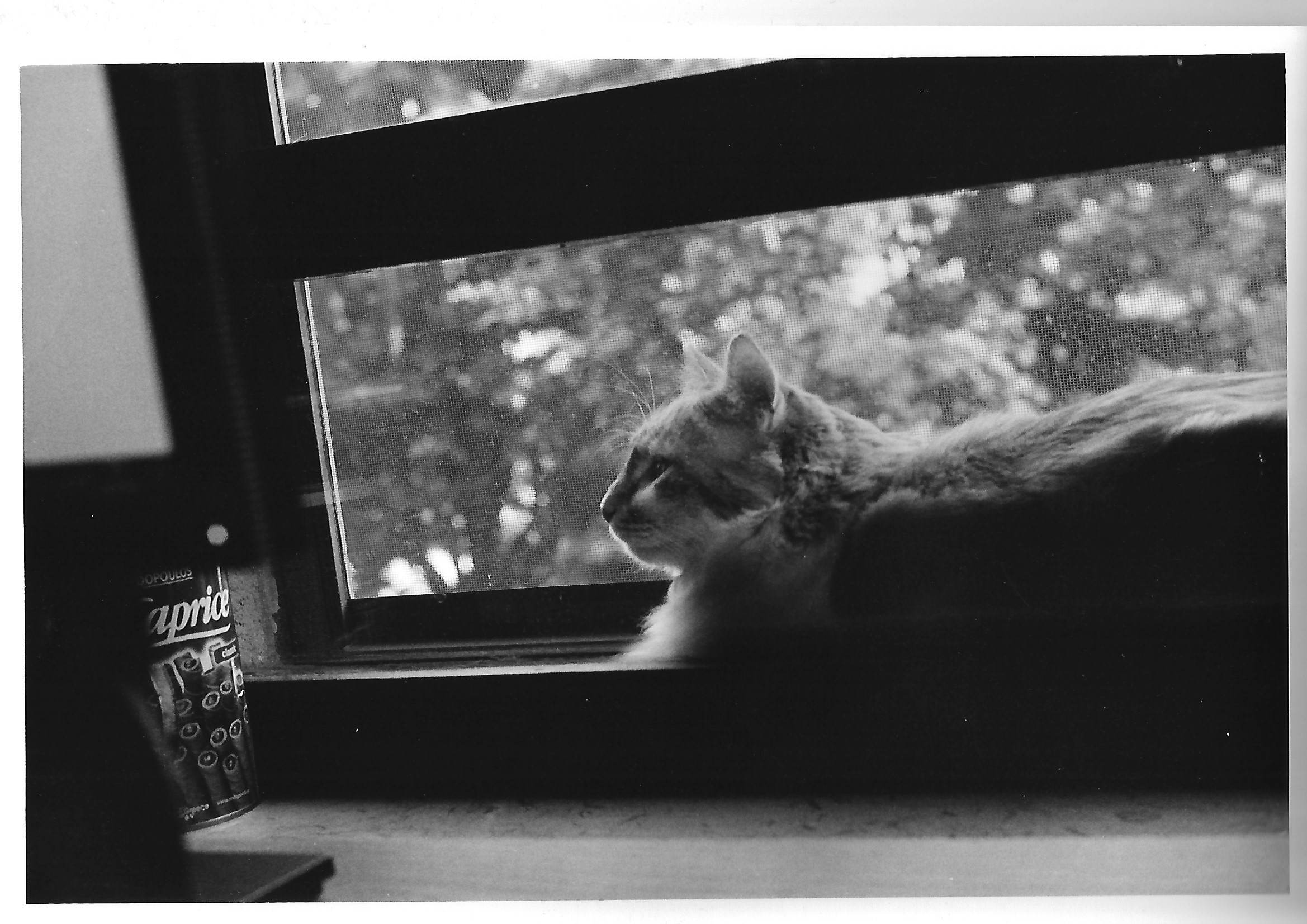 Moses, Analogue Cat...