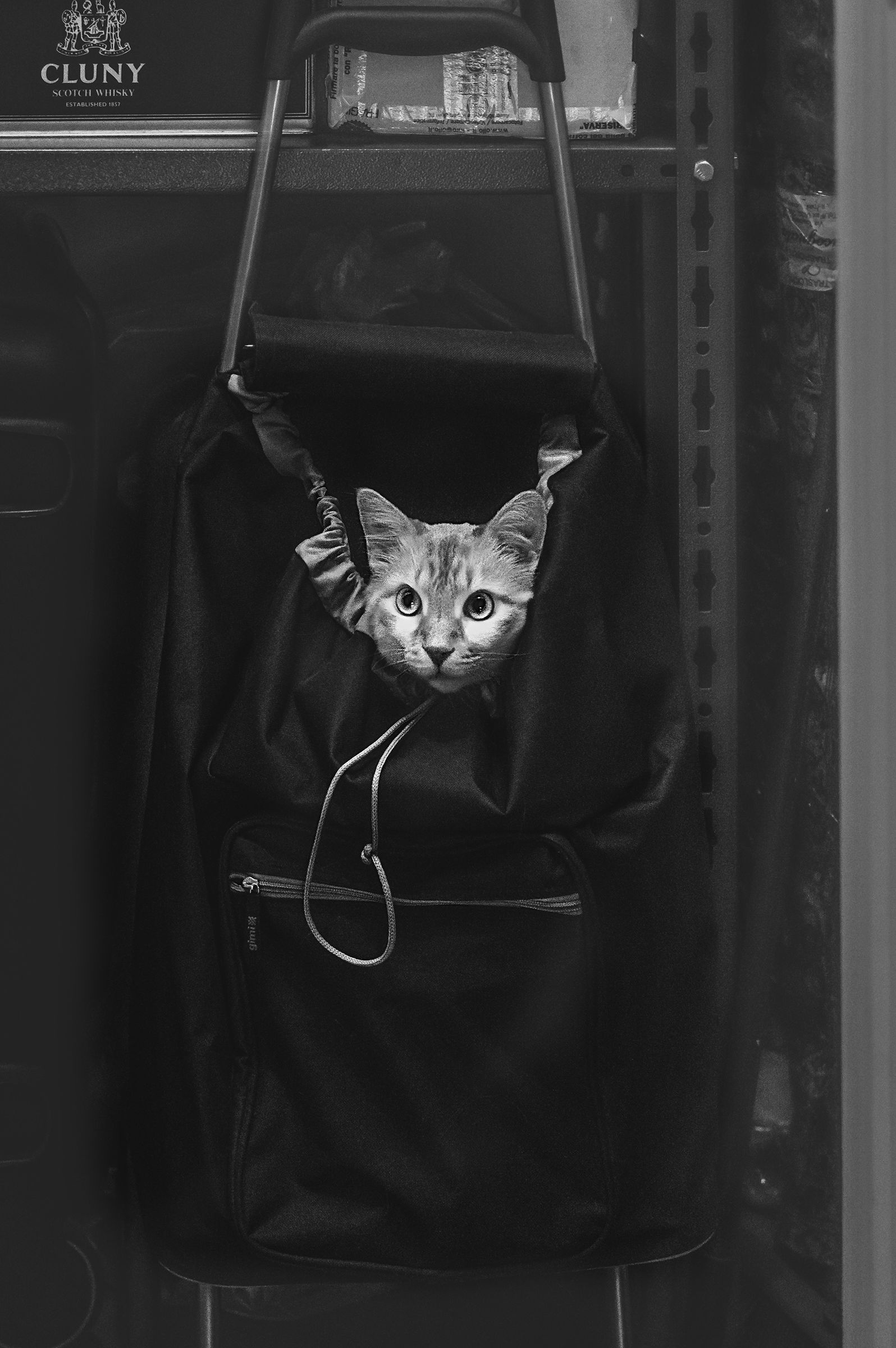 "Cat ""hidden"" BW..."