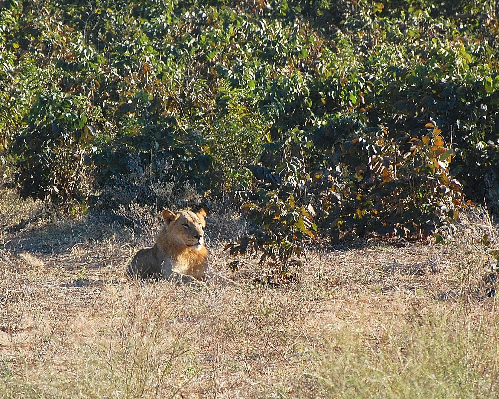 Botswana Chobe Park: Royal Dignity...