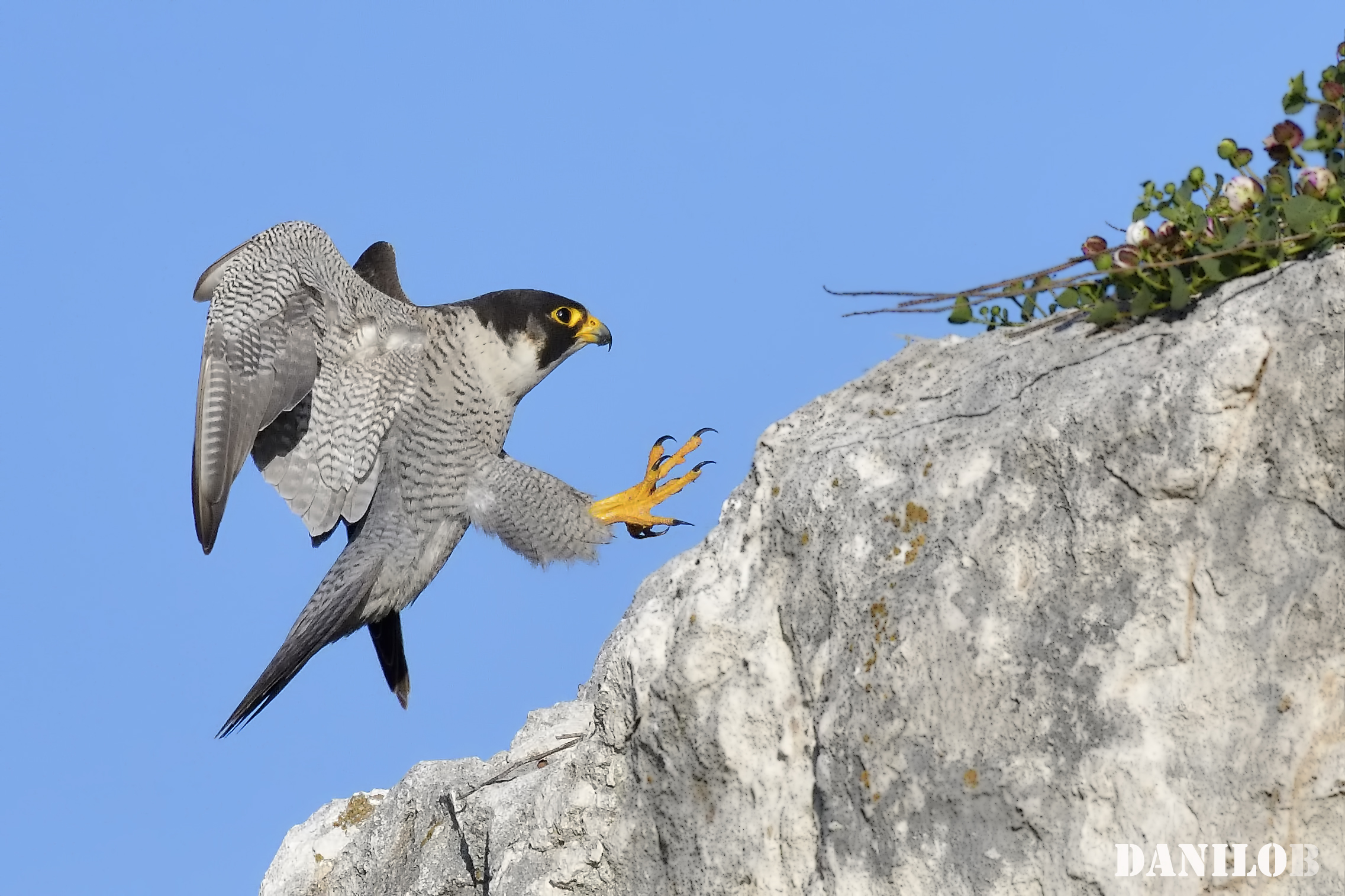 ... to the favorite Perch......