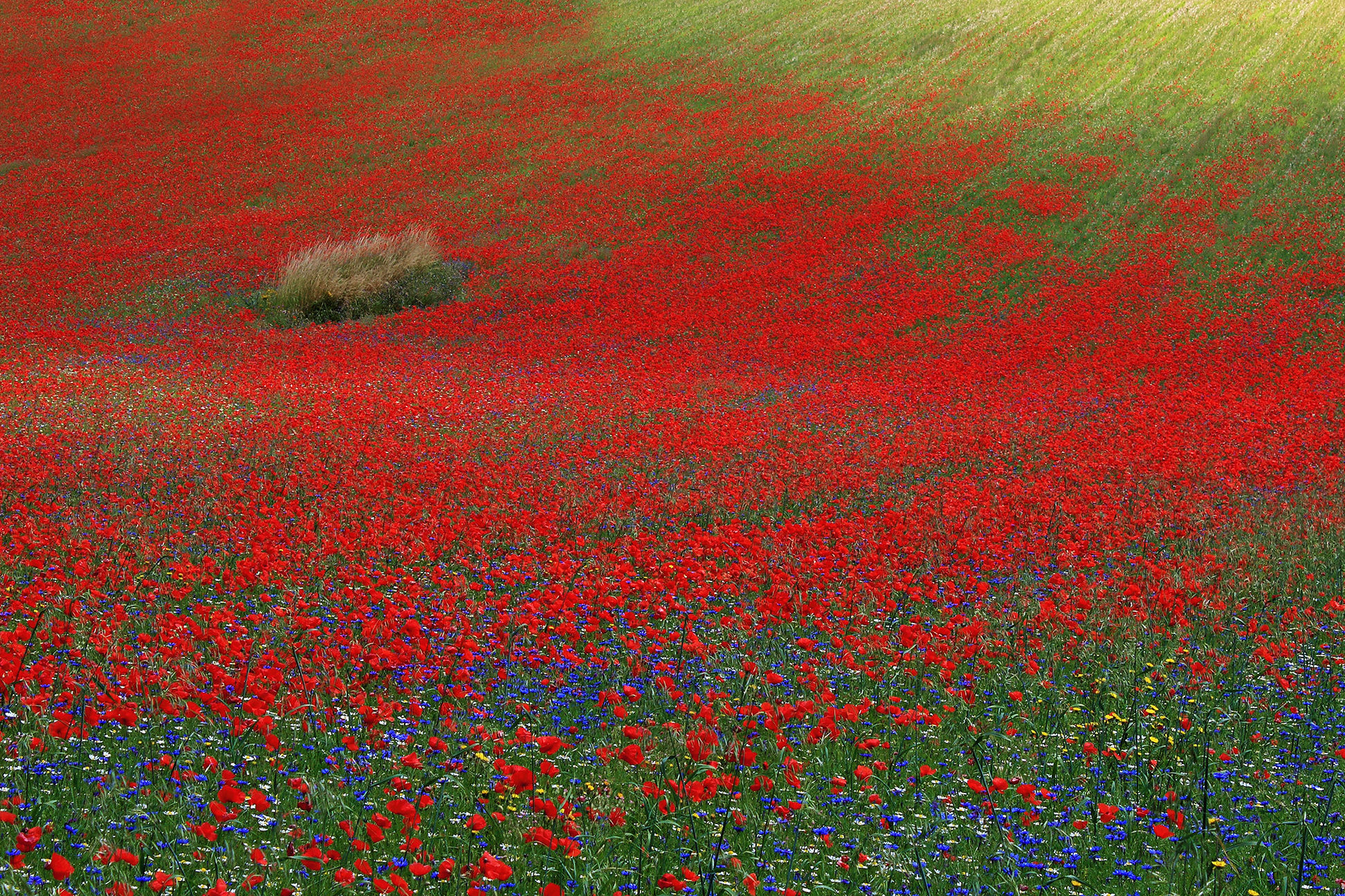 In the red of poppies...