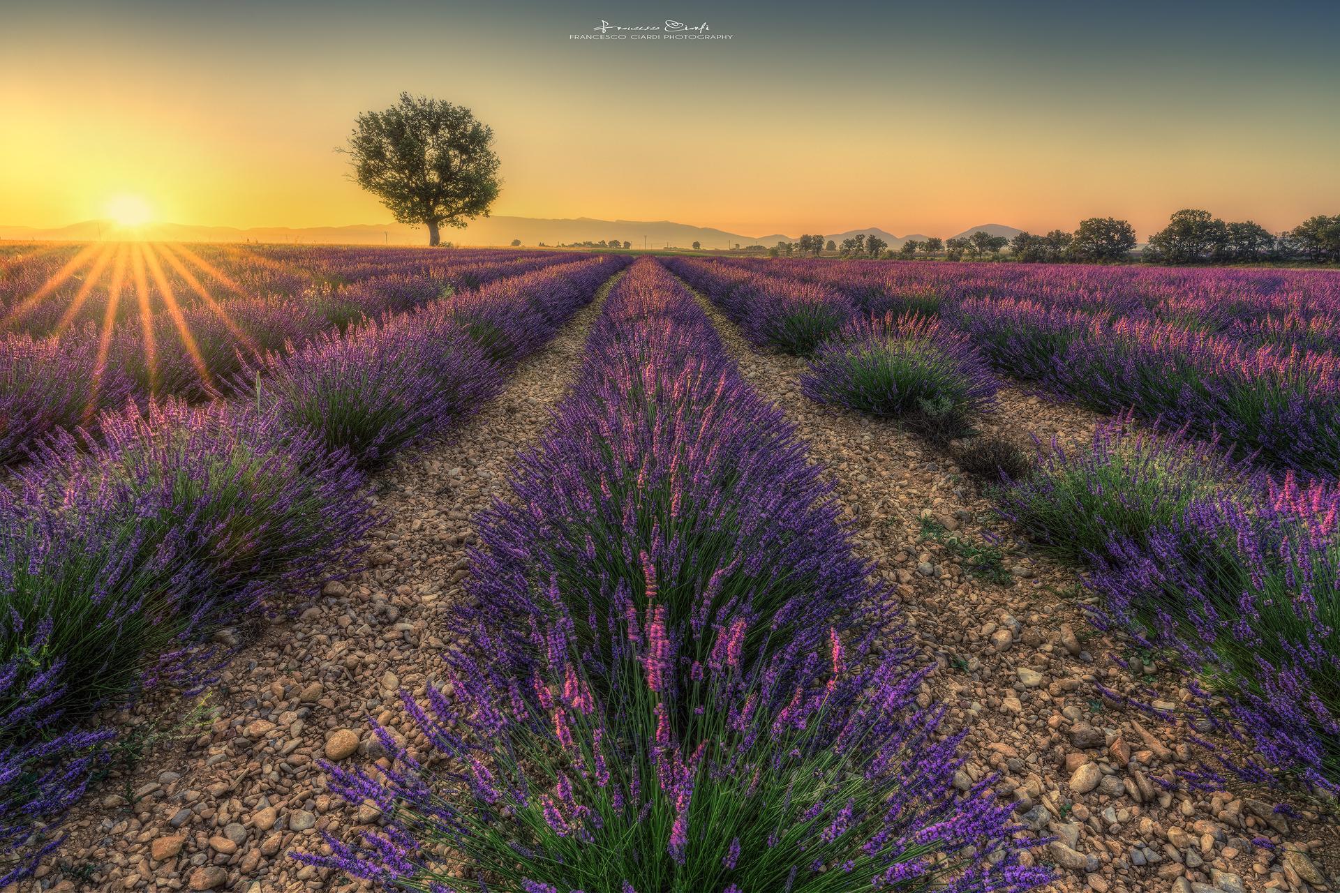 Sunrise in Provence...