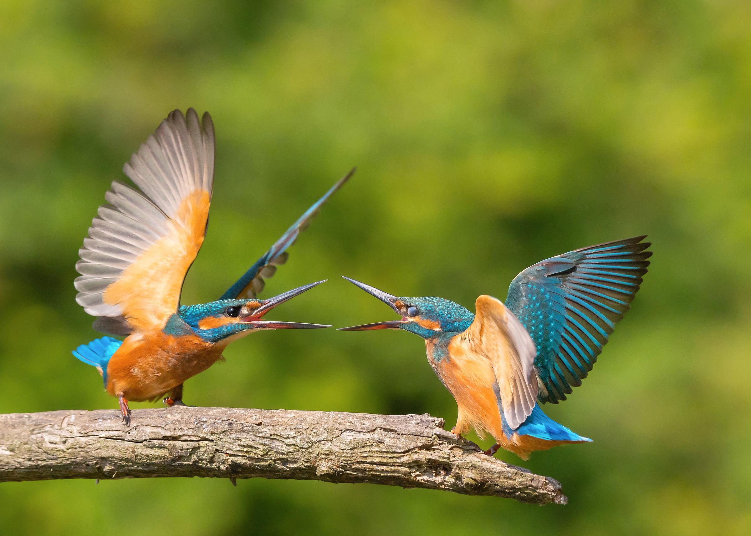 Quarrels...