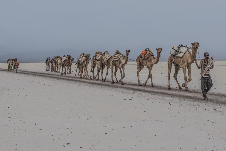 Caravan in the Salt plain ...