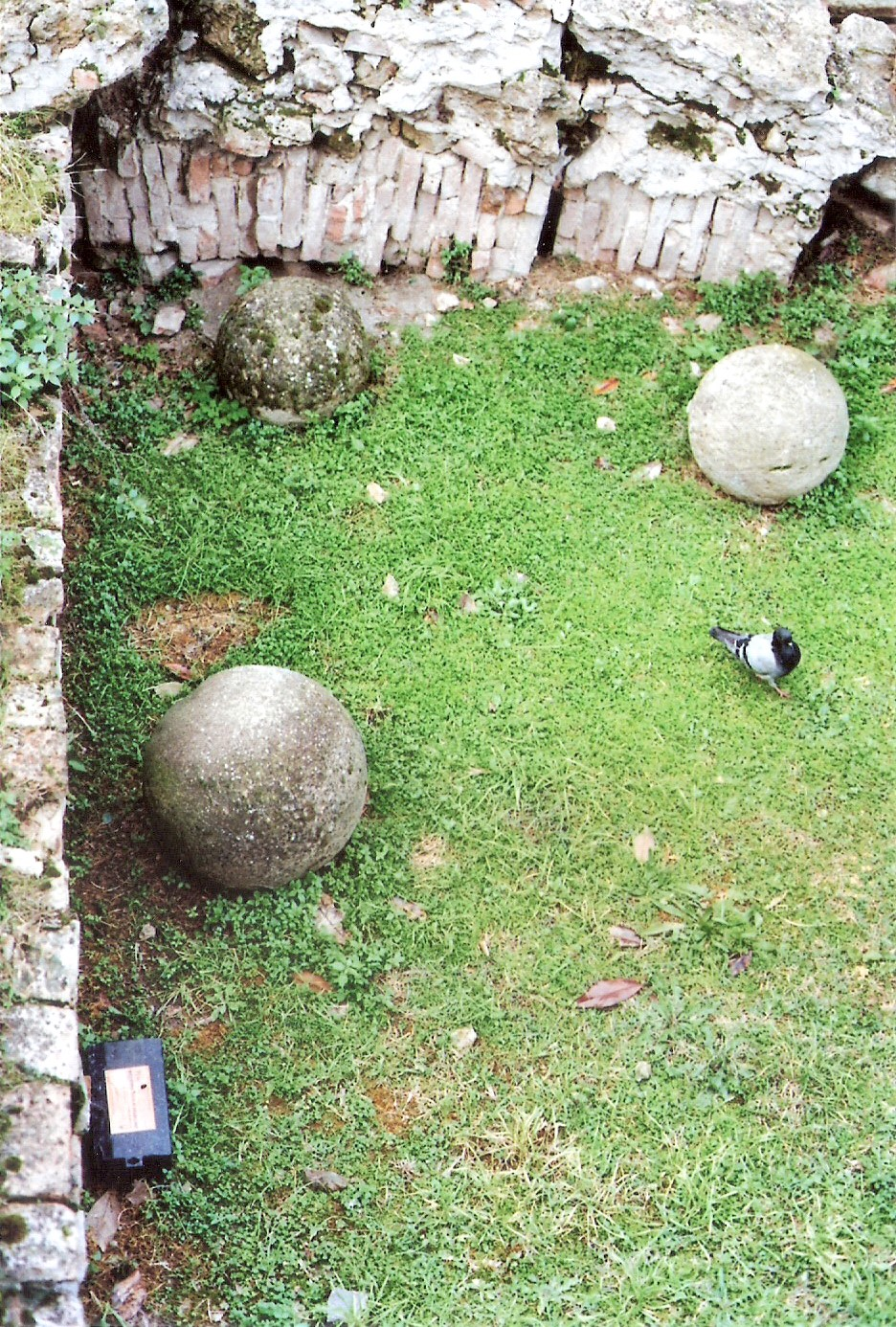Pigeon playing Bowling...