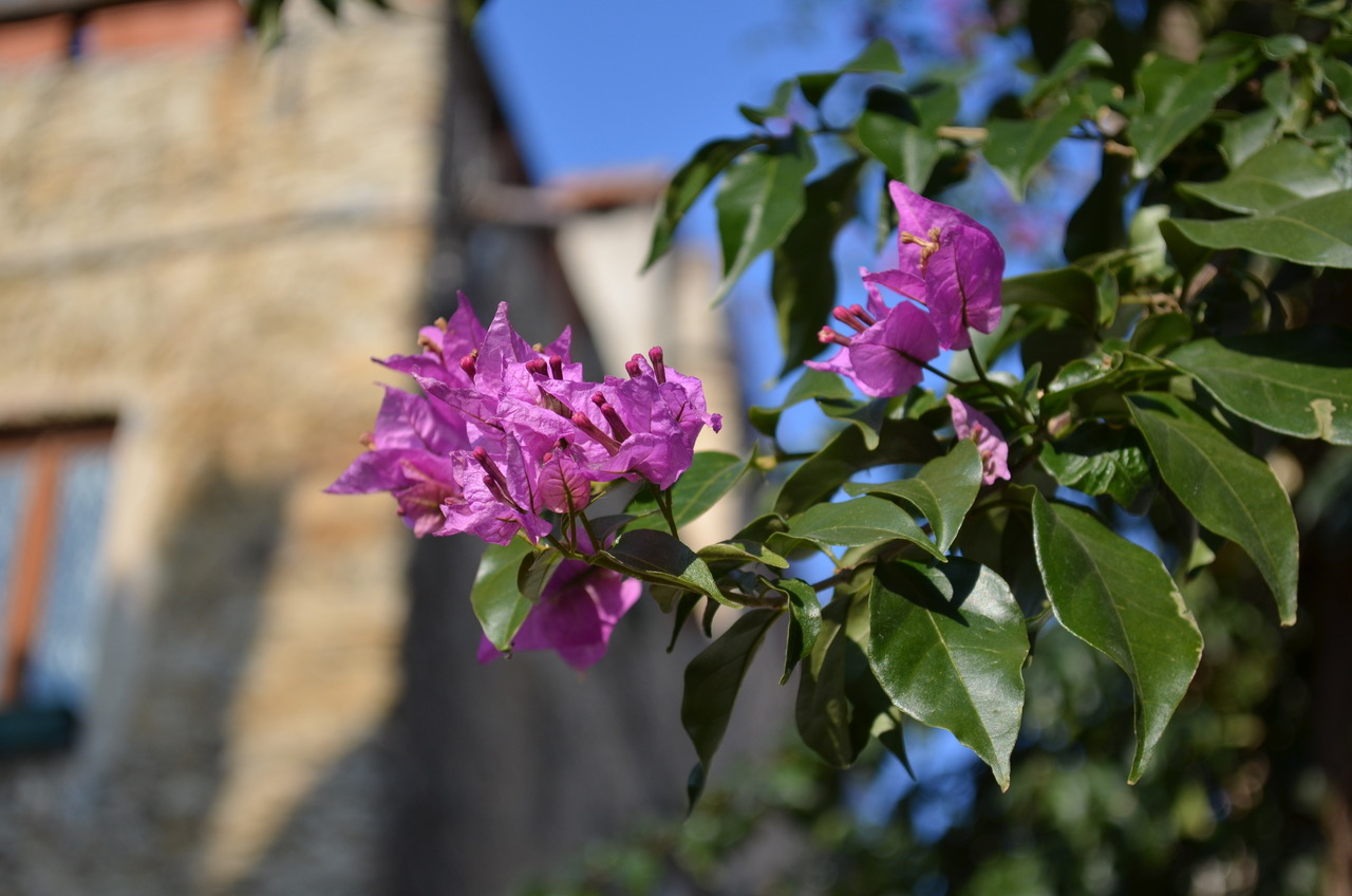 Fiore...