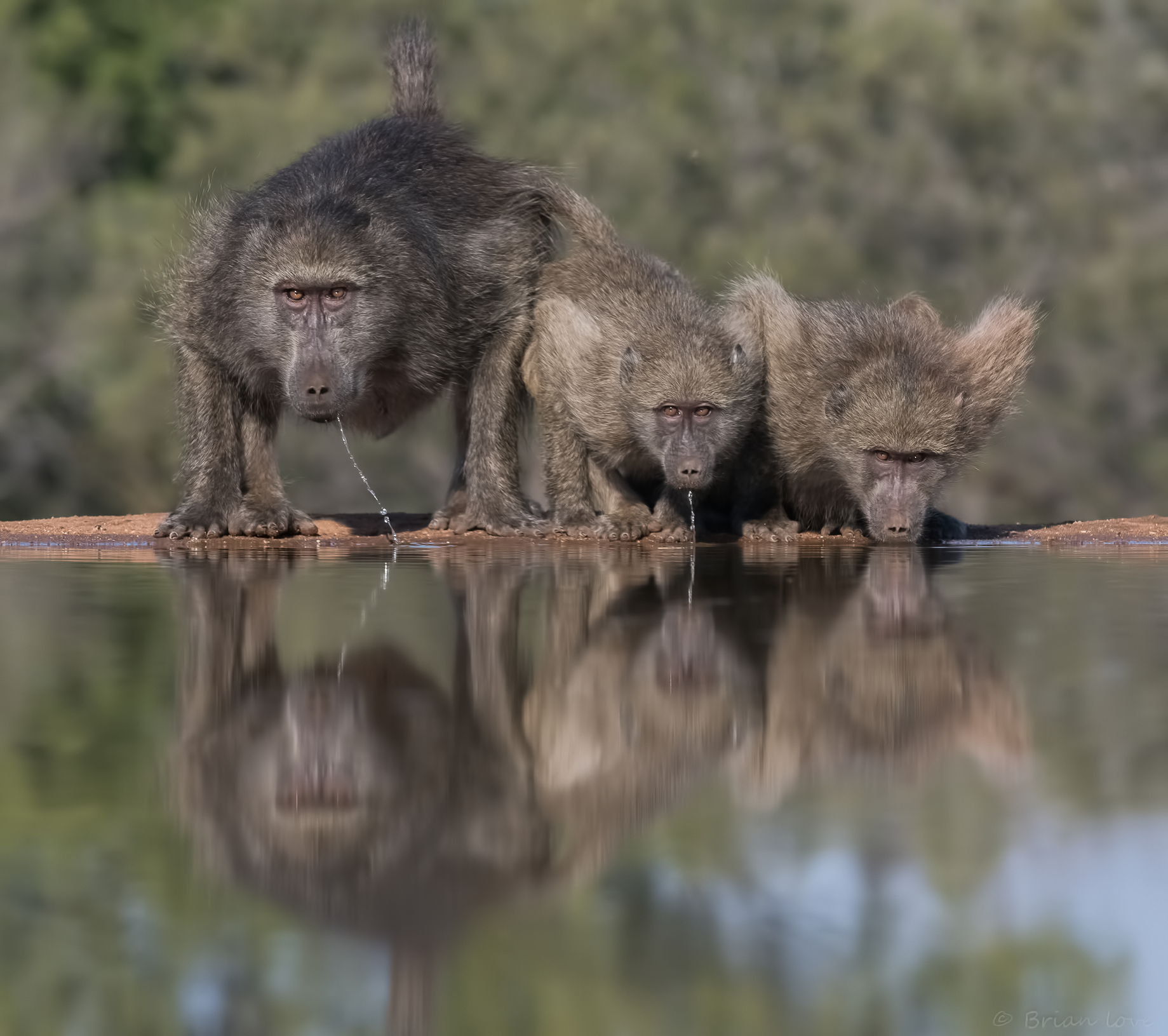 The 3 Wise Baboons...