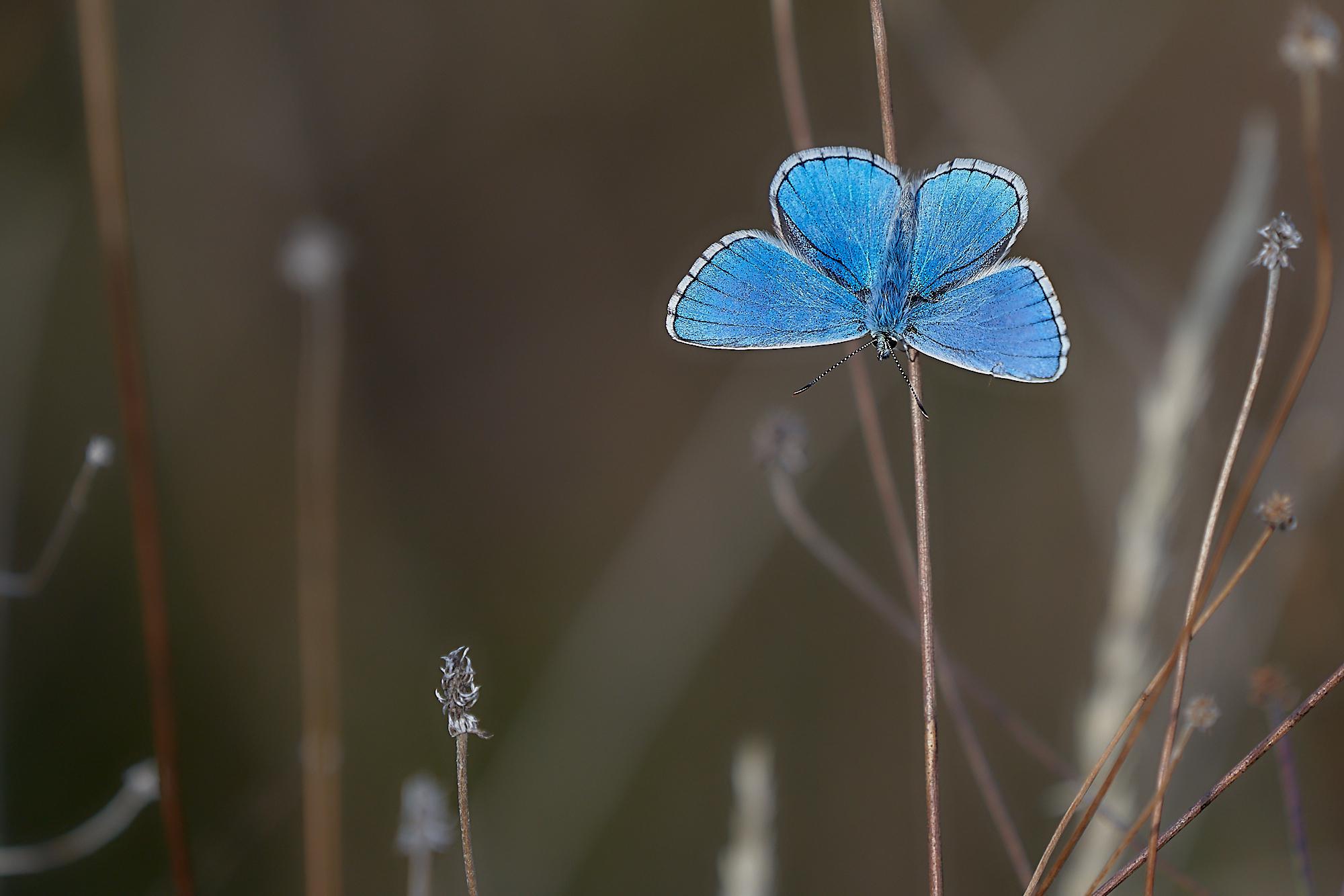 Rather Blue...
