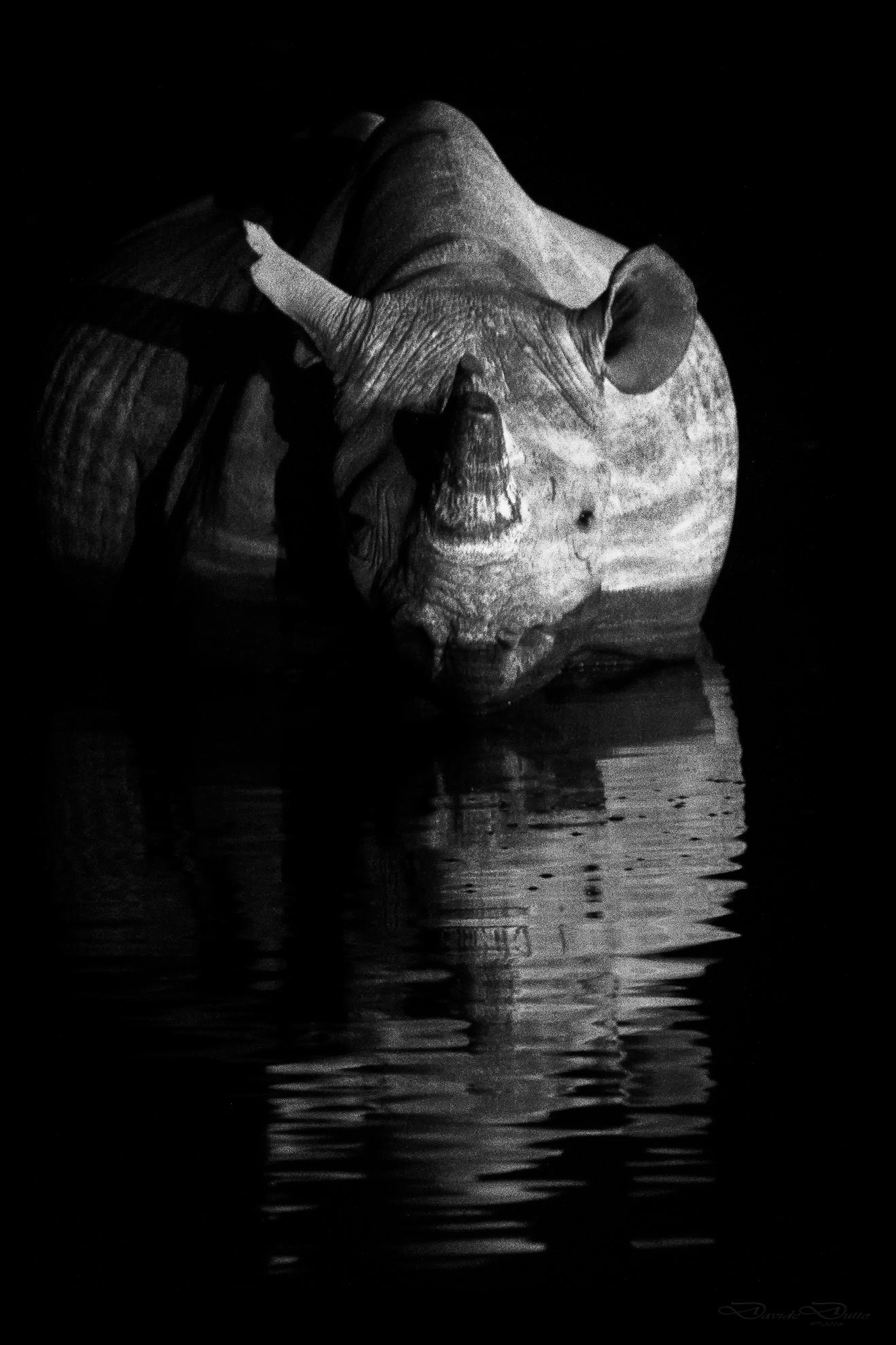 Black Rhino...
